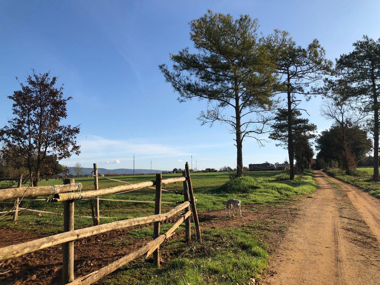 Casa rural en venta, bo baio, Serinyà